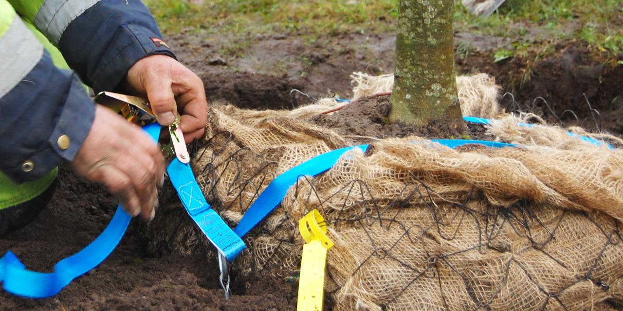 Plantera träd med Duckbill