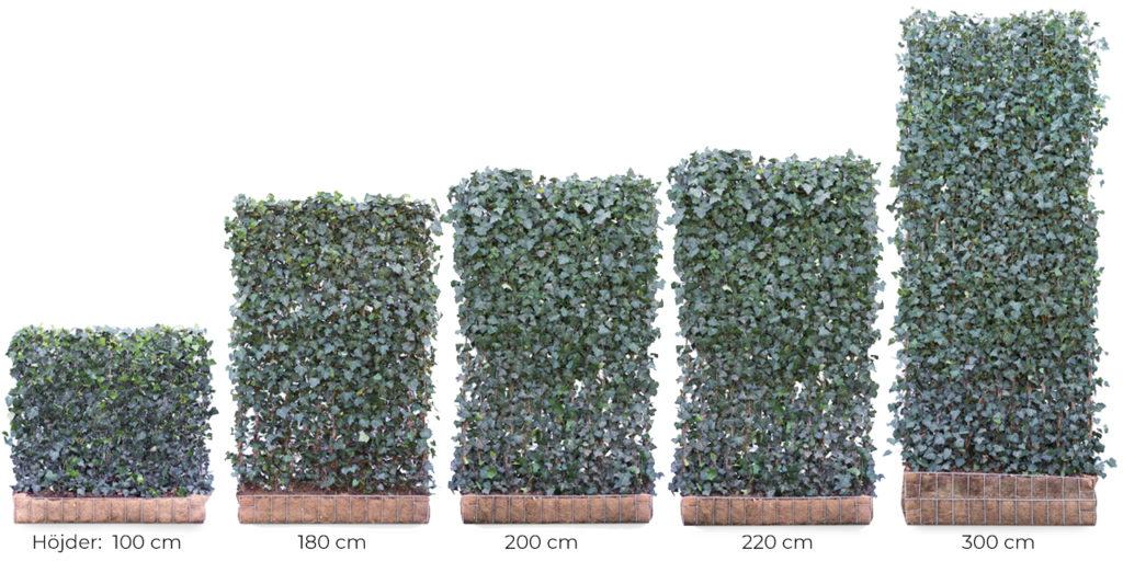 Växtskärm modeller