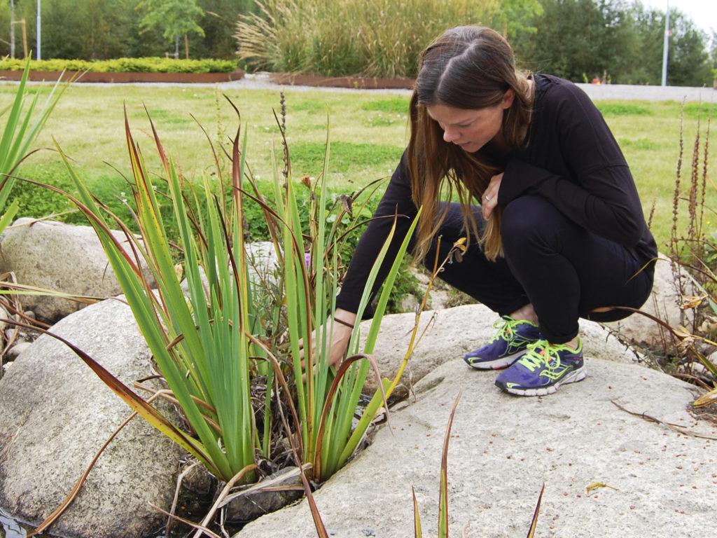 Plantering av maxiplugg