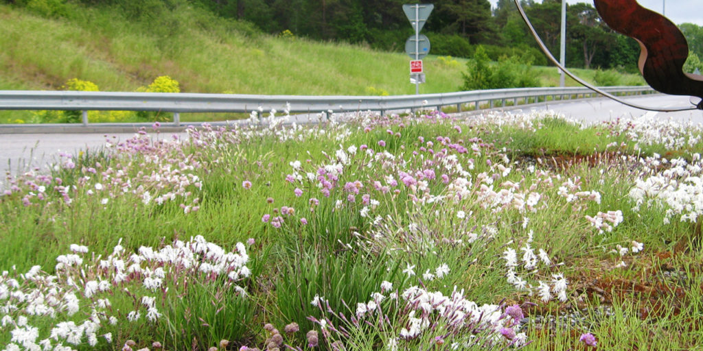 Örtpluggplantor i trafikmiljöer