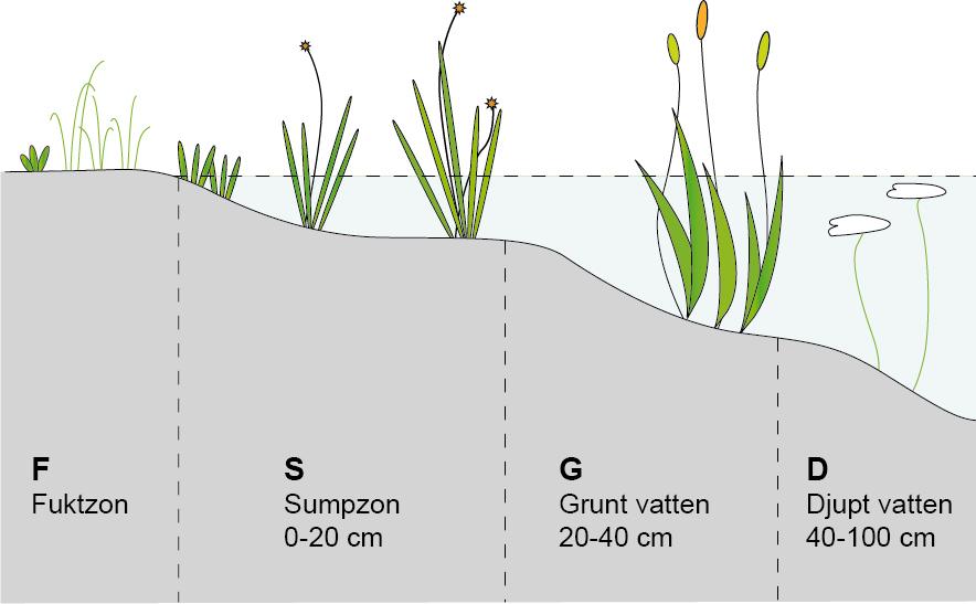pluggplantor på djup och nivå