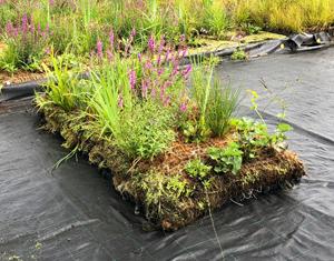 Flytande våtmark förbättrar vattenkvalitén i dammar och sjöar