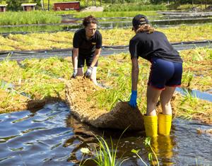Strandmatta odlade av Veg Tech används i vattenmiljöer