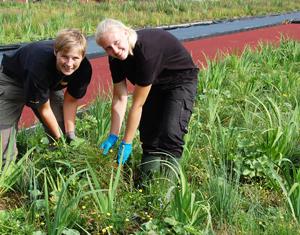 Strandrullar odlade av Veg Tech används i vattenmiljöer