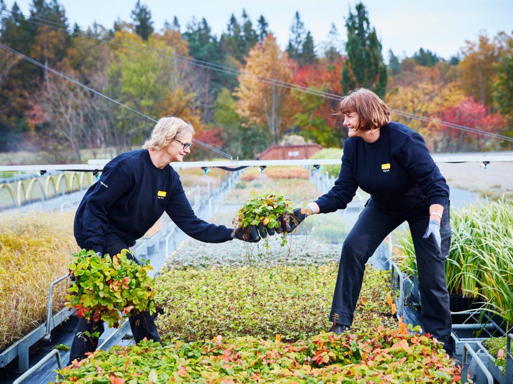 Veg Tech odling av örtplugg