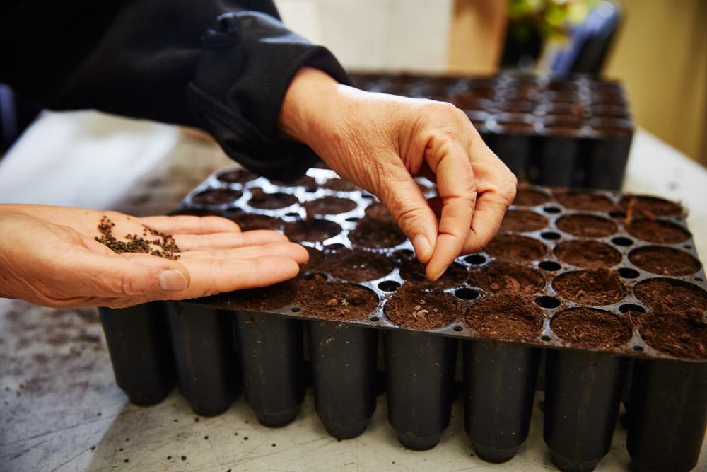Veg Tech odla med frö