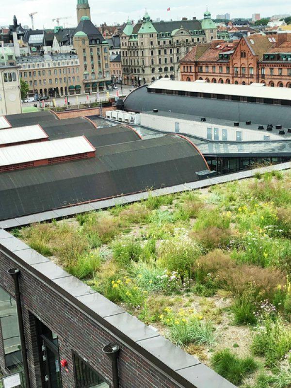 Foajén har en fin takträdgård som Veg Tech har monterat och planterat